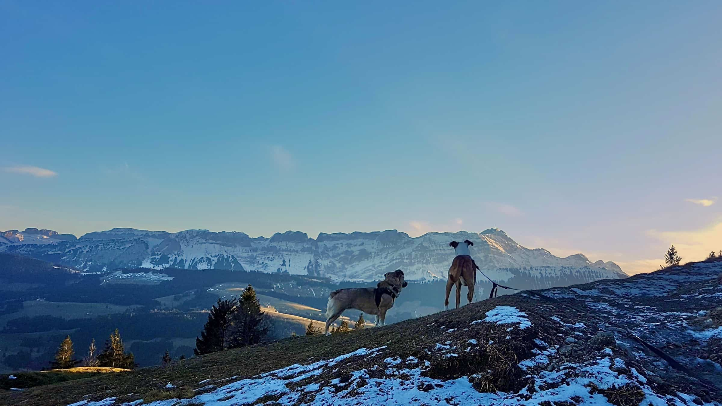 Vegan reisen in der Schweiz - Tipps von Bettina 3
