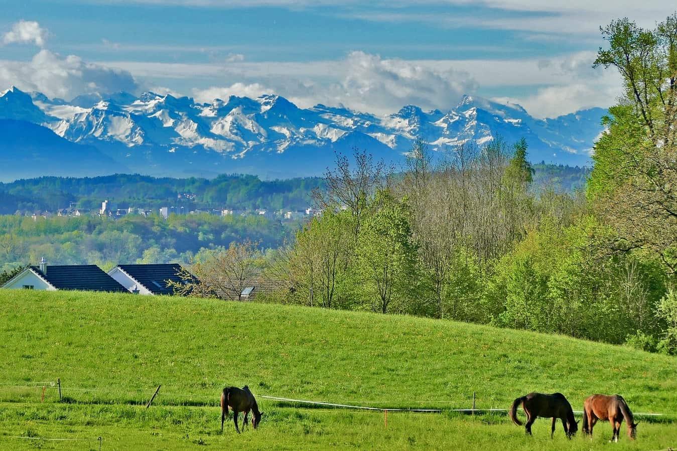 Vegan reisen in der Schweiz