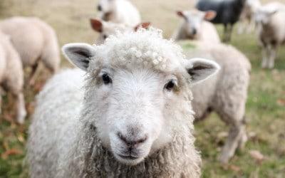 Vegane Bauern- & Lebenshöfe in Deutschland und Österreich